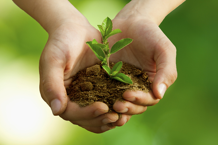 stock-photo-39342142-child-with-plant